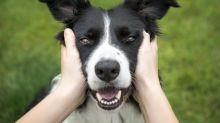 Algunas personas conseguirían opioides con ayuda de… ¿sus mascotas?