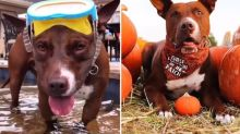 Pittie mix rescued from shelter becomes one of Instagram's most popular pups