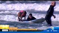Terminally ill teen wishes to surf with Ricochet the dog