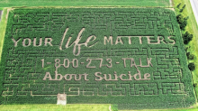 Family carves suicide prevention hotline in corn maze after tragedy: 'Your life matters'