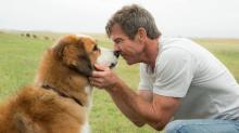 Third Party Investigation Finds No Animal Injuries, Cruelty on Set of 'A Dog's Purpose'
