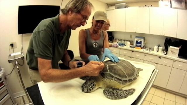 Florida Dentist Bonds With Turtle Over Broken Shell