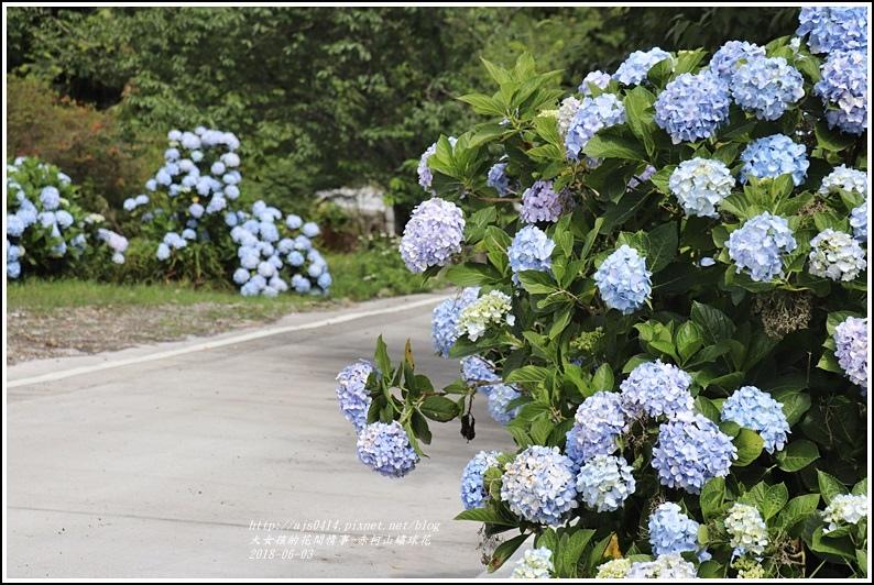 赤柯山繡球花-2018-06-23.jpg