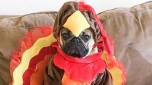We're thankful for these pictures of dogs dressed up as Thanksgiving turkeys