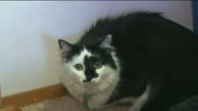 House Cat Traps Family in Home
