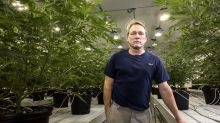 Canopy stock slumps after earnings show no initial boost from Canada legalization