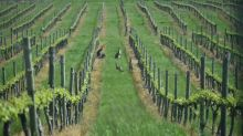 US private equity firm buys Australia's biggest wine producer