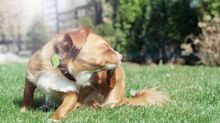 Whistle nixes GPS to make a more affordable health tracker for dogs