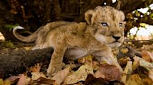 Africa's lions threatened with extinction by villagers bent on revenge