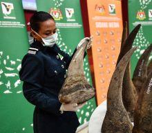Malaysia makes record $12-mn rhino horn seizure