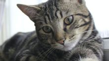 Pet cat dies of horrific injuries after being shot with high-powered air gun in 'brutal act of cruelty'