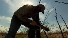 Advocates say migrant farmworkers lack access to vaccines — and that hints at a larger problem