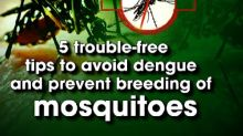 5 trouble-free tips to avoid dengue and prevent breeding of mosquitoes