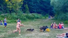 Boar that stole German nudist's laptop 'may be culled'