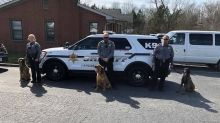 Lancaster SC's new K-9 dog, 'Jack,' helps SWAT, deputies sniff out drugs; man charged