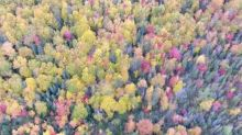 Drone Footage Captures Peak Autumn Foliage in Newfoundland