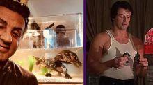 Sylvester Stallone se quedó las dos tortugas que Rocky le compraba a Adrian