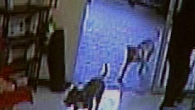 Dogs 'Gate Crash' Cumberland County Grocery Store