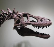 Fossil hunter tries to sell baby T-Rex skeleton on eBay for £2.25m, enraging scientists