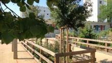 Moins de bitume et plus d'espaces verts: à Villeurbanne, les cours d'écoles se végétalisent
