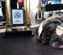 Jowls for days: Meet the 2017 World's Ugliest Dog winner