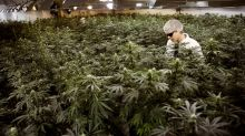 Canada weed stocks come off high as challenges loom before legalization