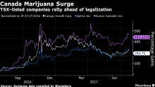 As Pot Craze Sweeps Canada, Largest Exchange Debates U.S. Policy