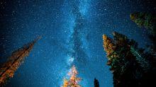QUIZ: ¿Hay más árboles en el mundo que estrellas en la galaxia?