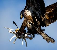 France Is Training Eagles To Take Down Drones To Fight Terrorism
