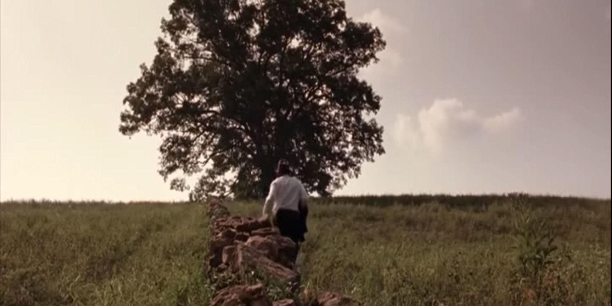 Shawshank Redemption Tree The Most Iconic Tree In Movie History Was Just Cut Down