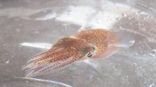 Space oddity: NASA puts squid into orbit