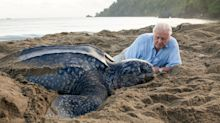 David Attenborough lying on the beach with a turtle isn't the most amazing thing you'll see in 'Blue Planet II' this week