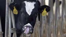 The recent jump in U.S. butter imports? All smooth, says Canadian dairy industry