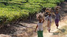 Floods, coronavirus dent India's tea output in first half of 2020