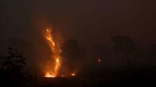 PF faz operação para encontrar responsáveis por queimadas no Pantanal