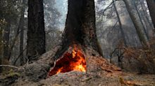 California's oldest state park, home to iconic redwoods, expects to close for year due to fires