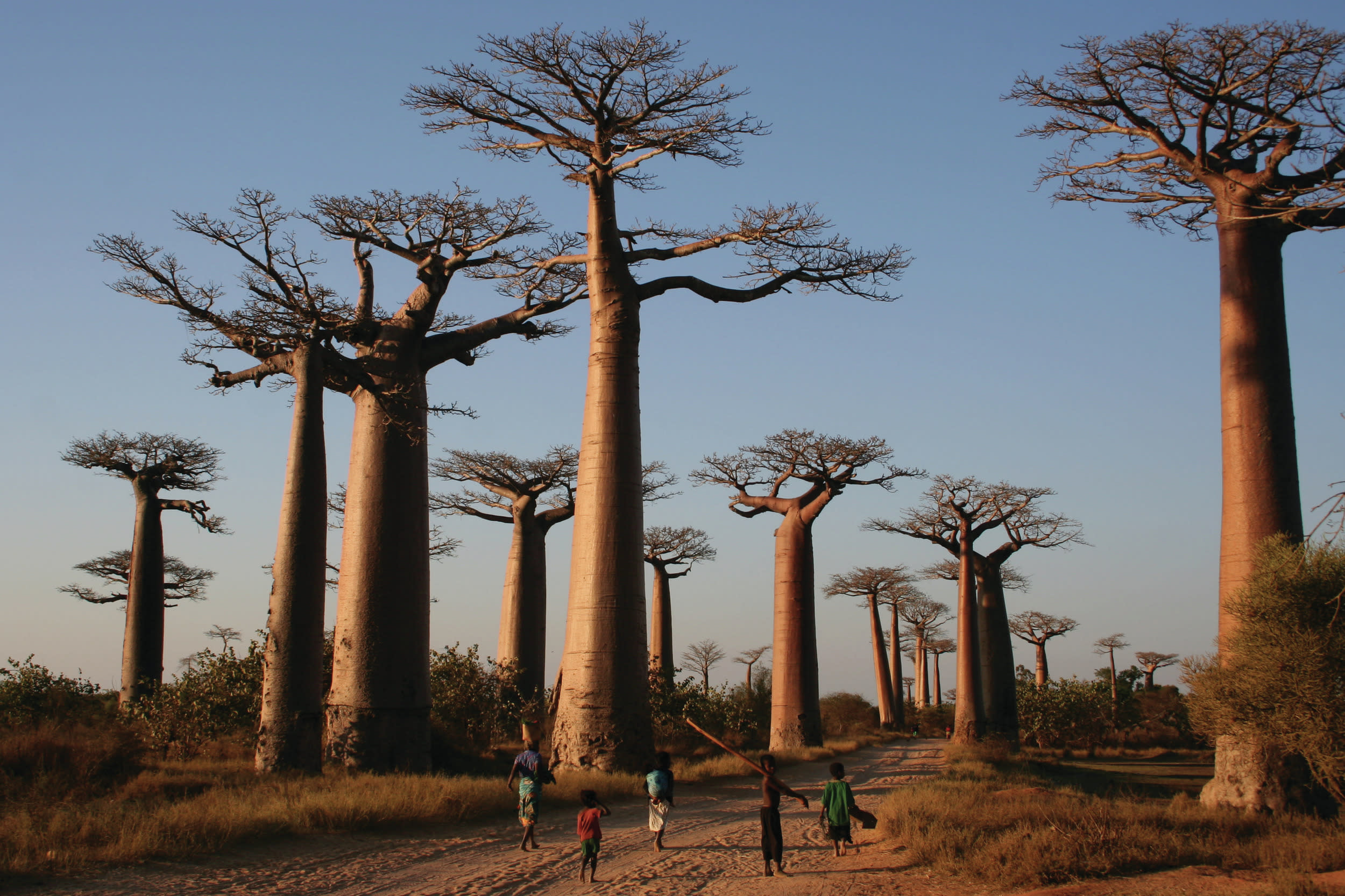 "<p>From ring-tailed lemurs to baobab trees, Madagascar is a biodiversity hotspot: over 80 per cent of its plant and animal species are found nowhere else on Earth. Isolated from Africa millions of years ago, the world's fourth largest island has evolved an incredibly rich ecology and a landscape that is as bizarre as it is unique, making it one of the most exciting destinations in Africa and a world away from the footie this summer. World Expeditions offers an 11-day <a href=""http://www.worldexpeditions.com/uk/index.php?section=trips&id=133658"" target=""_blank"">Unique Madagascar</a> holiday departing on 11 June and 9 July, from £1,390 per person.</p>"