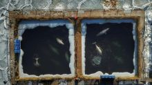 In Russia, a battle to free nearly 100 captured whales