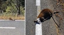 'Definition of lazy': Workers paint over roadkill while marking lines