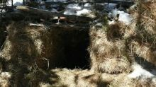 Colorado Parks and Wildlife Officers Build Cozy Den for Orphaned Bear Cubs