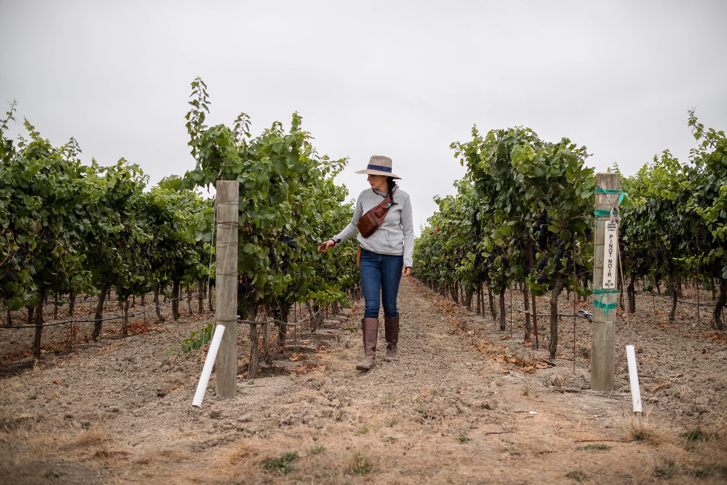 New Documentary Shines Light on Latinx Winemakers in Sonoma
