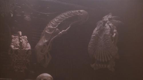 Alien Skull in Predator 2.