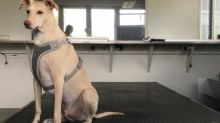 Helsinki Airport to use trained dogs to sniff out passengers infected with coronavirus