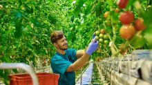Is S and W Seed Co. (SANW) A Smart Long-Term Buy?