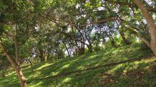 【Let's go hiking】長宏 青衣自然徑 青衣西路