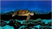 La historia detrás de esta tortuga que nada plácidamente (y se volvió viral)