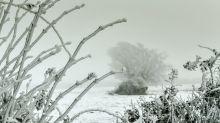 """Dans les Alpes, des chutes de neige inédites permettent de """"skier au milieu des champs"""""""