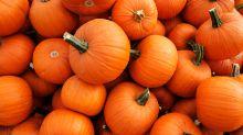 Social media is fueling an American pumpkin boom