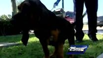K-9 puppies train for life in law enforcement