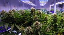 7 Canadian Stocks to Buy Now (And Only 2 Are Pot Stocks)